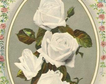 Photo of White Roses Bouquet on Vintage Birthday Postcard J Beagles & Co 1911
