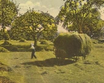 Vintage Postcard – Harvest Season – Gathering Hay The Hard Way Olden Days on the Farm 1923