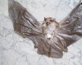 Ghost Bat Specimen - SHIP FREE 2