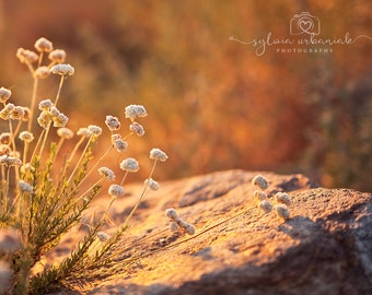 SunsetPhotography Nature Photography Landscape photography Golden light Photography Surreal Fine Art Photography Print