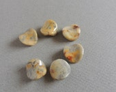 SALE Crazy Lace Agate, Wavy Rounds, 17mm Diameter, 6 Beads