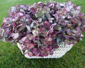 Hydrangea Basket   Floral Basket  Mother's Day   Get Well Gift   Birthday Gift   Basket Of Hydrangeas   Floral Arrangement  Shabby Chic