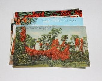 9 Vintage Florida Flame Vine Postcards Used