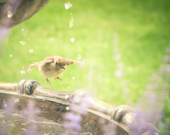 Sparrow Bird Photography,house sparrow,bird in fountain,art for baby's nursery,matte print,soft colors,gift for bird lovers,nature,woodland,