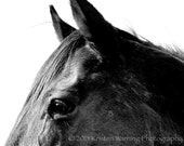 Horse Photos, Horses, Equines, Eyes, Thoroughbred, Face, Horse Pictures, Photography, Black and White