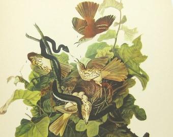 Vintage Audubon Print: 1940s Bird Lithograph, Brown Thrasher with Snake, Wood Pewee, Gorgeous Naturalist Litho Print
