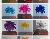 50 of champagne and 50 of royal blue ostrich feathers
