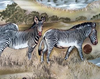 """Vintage 1994 Alexander Henry """"Zebras"""" - 1 1/2 yards"""