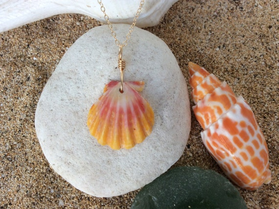 Hawaiian Sunrise Shell, 14k Gold Filled Chain Necklace