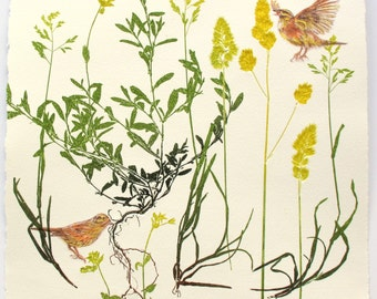 Rare bird print. Small farm bird with mono print plants. Cirl Bunting