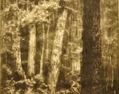 Etching by Ellen Oakford - Landscape - Woods in Sunlight