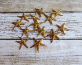 Beach Decor Small Brown Starfish 12 Small starfish for Nautical Decor, Beach Weddings or Crafts