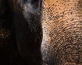 Elephant photography. Asian elephant photo art print. Grey brown home decor wildlife theme. Zen wall art large room deocration, animal lover