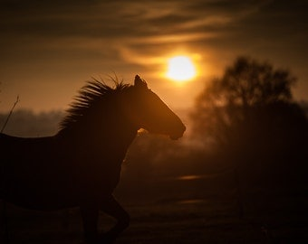 Horse photography. Wild horse running into the sunset. Wild West style photo print. Country and western art for rustic cowboy wall art decor
