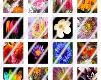 Mixed Flowers Scrabble Tile Images 4x6 Digital Collage Sheet Instant Download