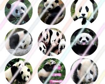 "Panda 1"" Bottle Cap Image 4x6 Digital Collage Sheet Instant Download"