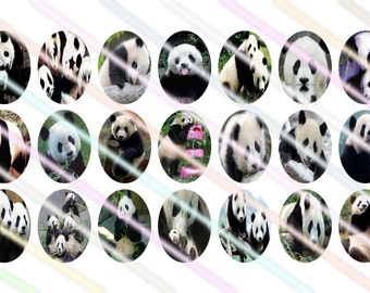 Panda 18mmx25mm Ovals Images 4x6 Digital Collage Sheet Instant Download