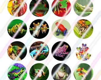 Frog 0.75 Bottle Cap Image 4x6 Digital Collage Sheet Instant Download