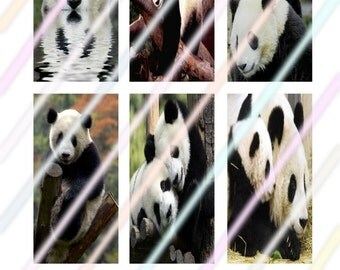 """Panda 1"""" x 2"""" Domino Images 4x6 Digital Collage Sheet  Instant Download"""