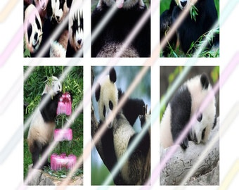 """Panda (#2) 1"""" x 2"""" Domino Images 4x6 Digital Collage Sheet  Instant Download"""
