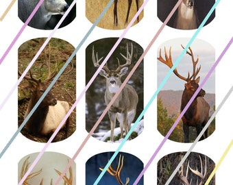 Bucks Dog Tags Images 4x6 Digital Collage Sheet Instant Download