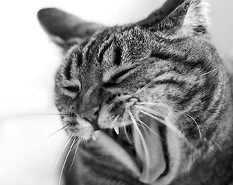 Stripes, Cat Photography, Tabby Fine Art Print or Greeting Card