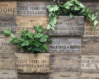 Vintage Wood Crates Planters on Wall    Create a wall Garden outside or Inside!