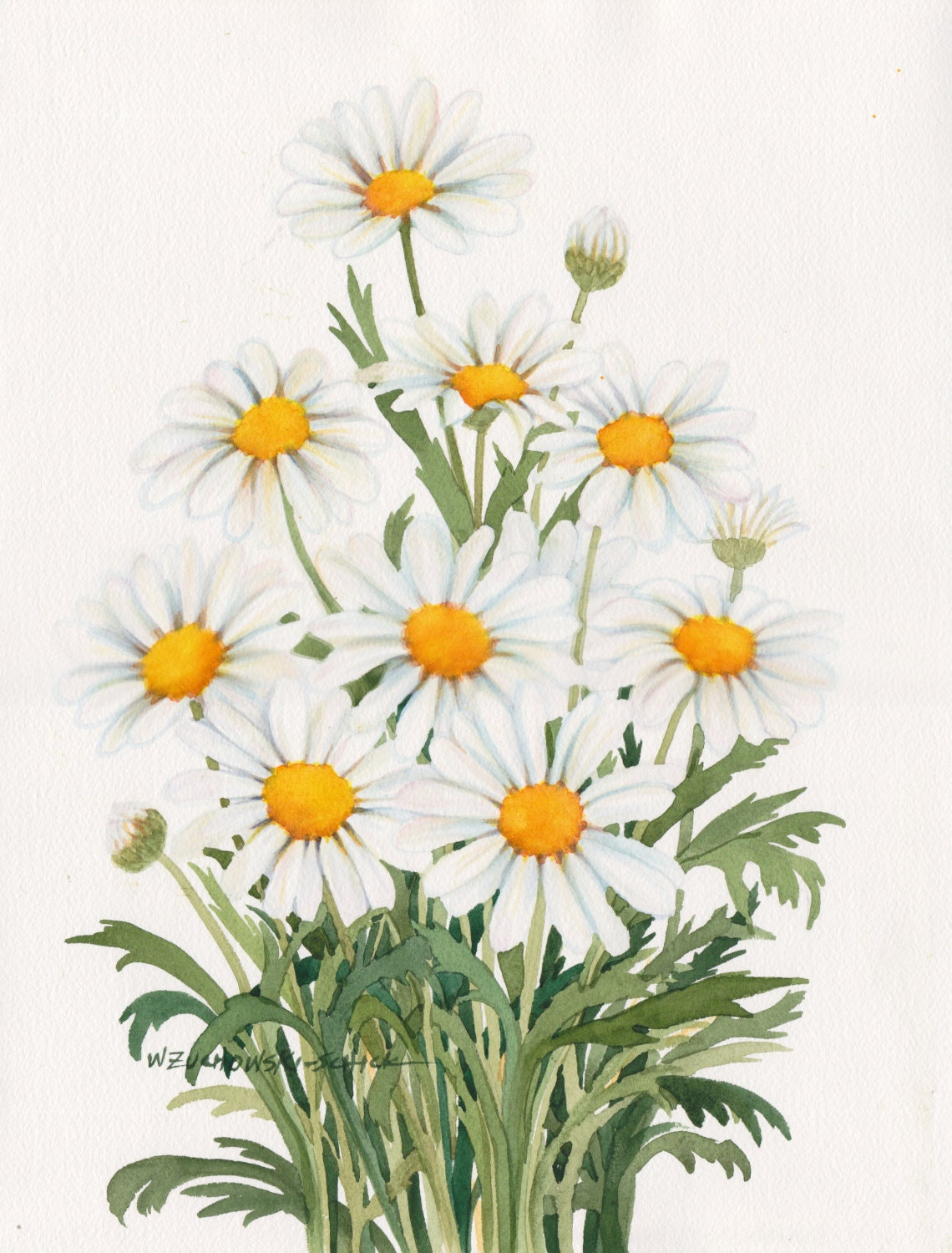 White Daisies Original Watercolor Painting 11x15 By