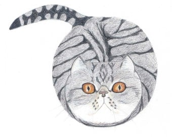 Funny Cat Cards - Grey and White Tabby Cat/Exotic Persian Cat Gift Cards