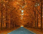 Vinyl Photography Backdrop Floordrop Prop - Autumn Road