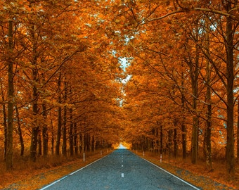Vinyl Photography Backdrop Floordrop Prop - Autumn Road