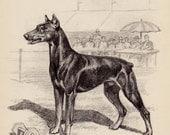 Vintage DOBERMAN Print Illustration Black and White Gallery Wall Art Home Library Decor Dog Lovers Gift Nursery Decor 2112