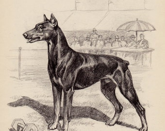 Vintage DOBERMAN Print Illustration Black and White Gallery Wall Art Home Library Decor Dog Lovers Gift 2662