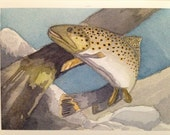 German Brown Trout Card Watercolor Card Man Card Nature Blank Card