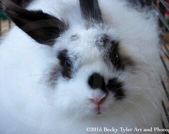 White Fluffy Rabbit  Fine Art Photo Print