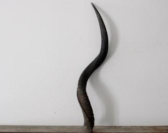 Authentic, Long Kudu Horn