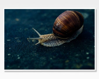 Snail Photograph, Snail Photo Print, Snail Photo, Snail Wall Art, Blue Wall Art, Blue Home Decor, Animal Print, Snail Home Decor
