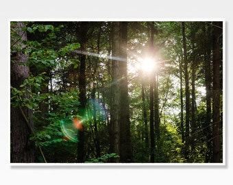 Nature Art Print, Forest Print, Forest Photo Print, Forest Photograph, Sunlight Print, Nature Photography, Green Forest Art, Forest Decor