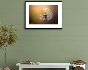 Dandelion Photography Print, Brown Wall Art Print, New Home Housewarming Gift, Nature Photography,  Dandelion Wall Art, Dandelion Print