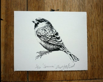 Sparra - limited edition sparrow screen print