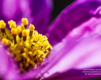 Flower Photography, Macro Print, Closeup Flower, Wildflower Decor, Large Macro, Micro Photography, Flower Petals, Photography Macro