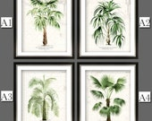 Palm Tree Prints II - Palm Print - Vintage Palm Trees - Natural History Prints - Urban colored Palm Trees - SHIPPING INCLUDED Secret Harbor