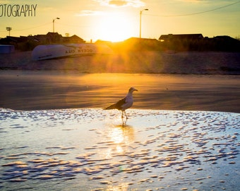 Seagull in Ocean City, New Jersey (beach, sunset)