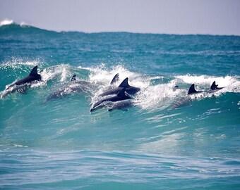 Dolphin Photography, Surf Photography, Wave Photography, Wave break Dolphin Waves, Surf Break Photo, Australia Beach Photos, Dolphin photos