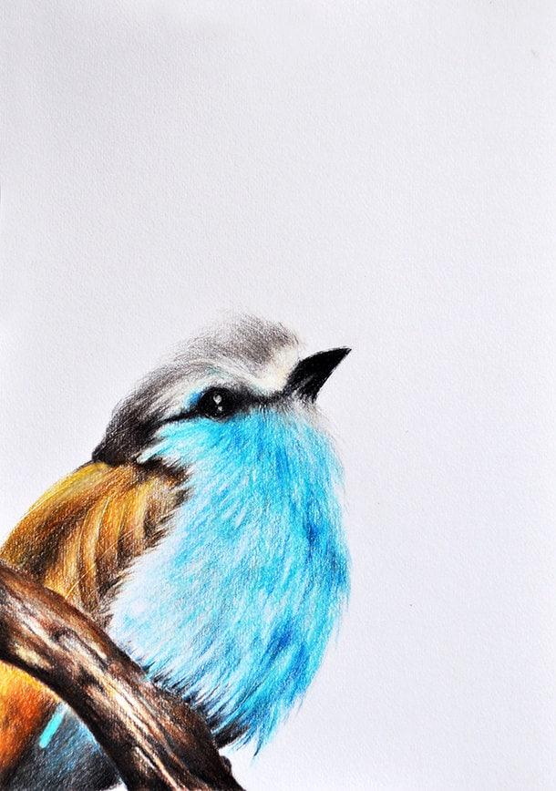 Original Colored Pencil Bird Drawing 8x11 inch Bird Art