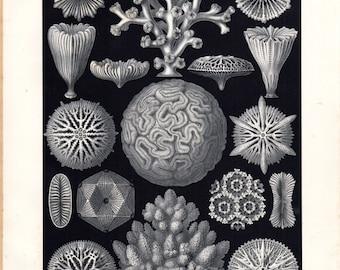 Original Ernst Haeckel Print Print 1899  Hexacoralla Coral Marine Life Kunstformen Natur 1st Pl 9 Antique Print