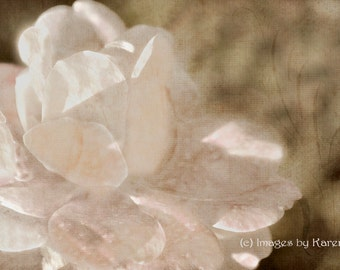 Digital Art - Fine Art Photography - White Rose