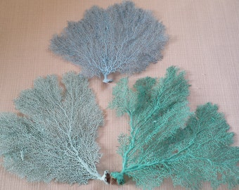 "Beach Decor, Sea Fan Coral, 10""-12"", Sea Fan, Sea Fans, Coastal Decor, Nautical Decor, Beach Wedding Decor"