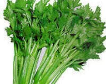 Celery- Tall Utah- - 200 seeds-