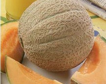 Cantaloupe- Heart of gold- 25 seeds
